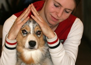 Cranio-Sacral-Therapie Hund Radagais 02
