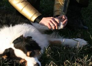 Dorntherapie Hund Radagais 01